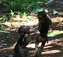Give it back  - young baboons Lake Manyara - Tanzania by john  Lenagan