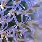 Blue headed thistle super macro by ruthjulia