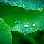 Water droplets on leaf by ruthjulia
