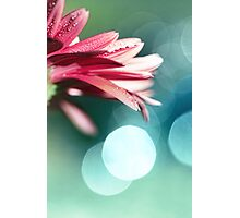 Nature's Dreaming Photographic Print