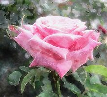Pink Roses in Anzures 6 Watercolor by Christopher Johnson