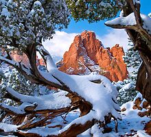 Winter Garden Framed By Twisted Juniper Trees by pilgrims492003