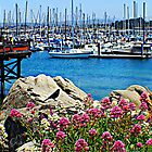 """Fisherman's Wharf"" by Gail Jones"
