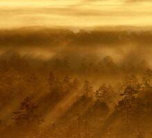 27.8.2013: Sunrise in Torronsuo National Park II by Petri Volanen