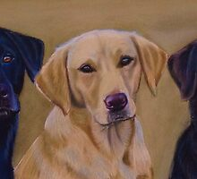 The Ropehall Labradors by Jane Smith