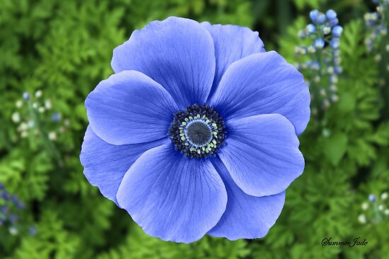 Indigo Anemone ~ A Cool Beauty by SummerJade