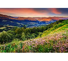 wild flowers in mountains Photographic Print