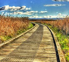 Tamar Island Boardwalk by Marcus Salter