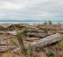 Boundary Bay by Tracy Friesen
