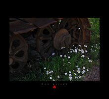 Stilled by Daisies by Don Bailey