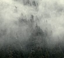 Mist Forrest by Laurens