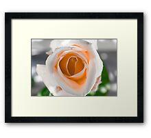 White N Orange Rose Framed Print