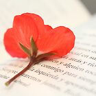 Red flower and book by Lavanda