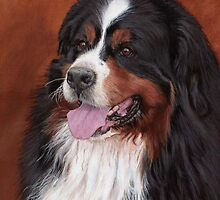 Bernese Mountain Dog by Emma Richardson