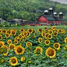 Sunflower Farm by Lori Deiter