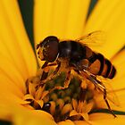 Flower Fly on Sunflower by Kane Slater