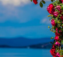 Dream full of Roses by Sotiris Filippou