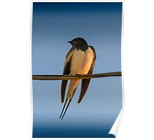 Happy Little Swallow Poster