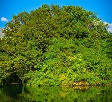 Green forest by Sotiris Filippou