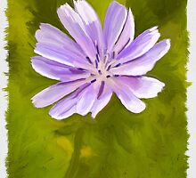Chicory Digital Painting by amybeth