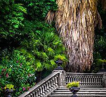Stairs to Nature by Sotiris Filippou