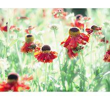 Dreamy Summer by Photolucid