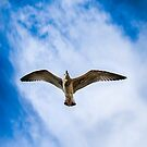 Flying High by Sotiris Filippou