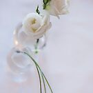 Roses blanches by Jacinthe Brault
