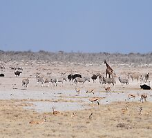 Wildlife at the Watering Hole by BeckyMP