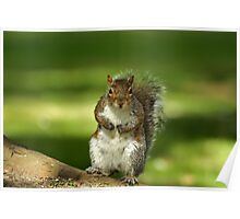 Squirrel t-shirt Poster