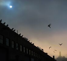 Seagulls at Fisherman's Wharf by David Denny