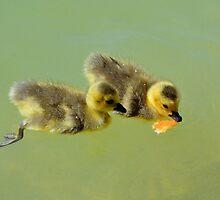 Goslings by Eleu Tabares