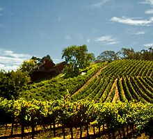 Napa Vineyards by Zriseon3