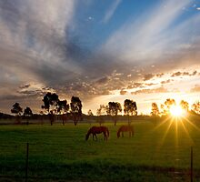 Evening light ~ Stockinbingal NSW by Rosalie Dale