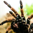 Tarantula by Sotiris Filippou