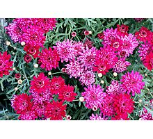Shades of pink Photographic Print