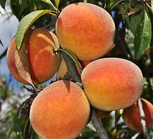 """""""Going to the Country, Going to Eat a Lot of Peaches . . ."""" by Caleb Ward"""