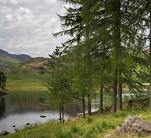 Blea Tarn Lake District National Park by Nick Jenkins