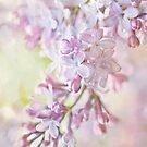 Pastel Lilacs by Beth Mason