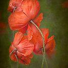 Poppy Family by Beth Mason