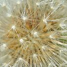 Dandelion (iPad Case) by William Brennan