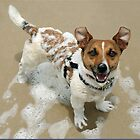 Jack Russell Rescue Xmas Card 2 by JRTrescue