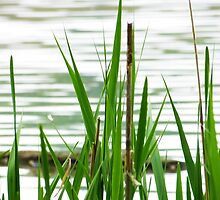 Wetland Grass by SRowe Art