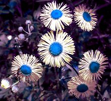 English Daisies - Surreal Blues by MSRowe Art and Design