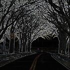 Tree-Lined Highway by Kim Krause