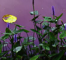 Pickerelweed by MSRowe Art and Design