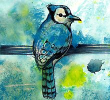 True Blue Jay  by Alysha Lach