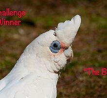 The Birds Challenge Winner Banner by Steve Randall