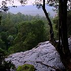 Lookout for the Rainforests by imaginethis