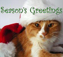 Season's Greetings Christmas Cat in Santa Hat by MoMoCards